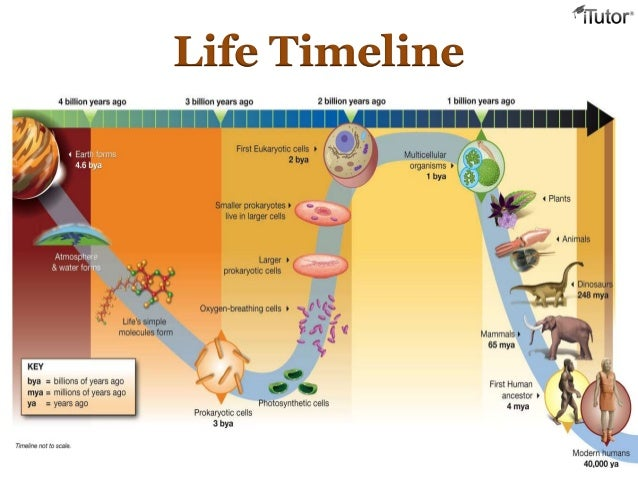 timeline of life on earth The earth is over 5 billion years old life first originated in the oceans 34 billion years ago the dinosaurs died out 65 million years in the past.