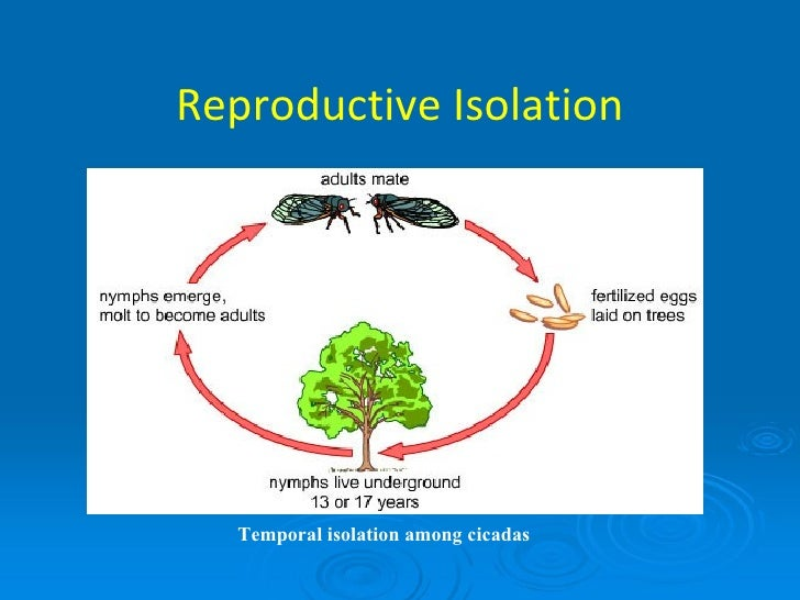 the effects of reproductive isolation Results for 'reproductive isolation' make informed reproductive choices, and, in effect, wrest control of their bodies from a patriarchal medical establishment.