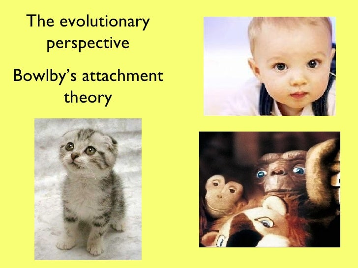 evolutionary theory of attachments An evolutionary theory -he believes that attachment is a behavioral system that has evolved because of its survival and reproductive value attachment is adaptive: forming an attachment.