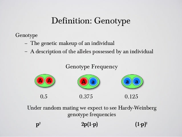 genotype definition - photo #2