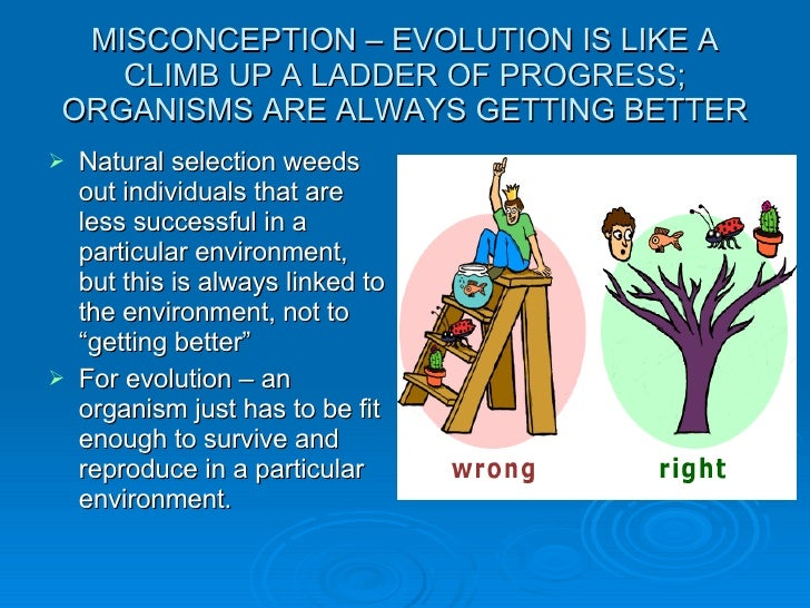 Misconceptions About Evolution And Natural Selection