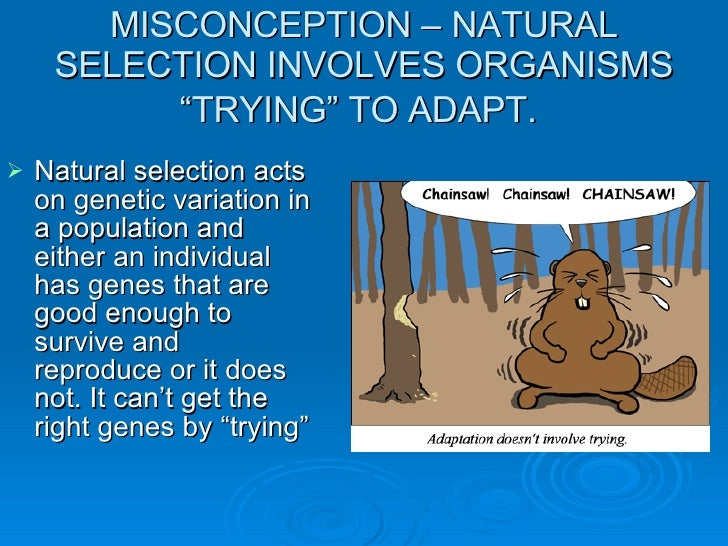 Natural Selection Involves Organisms Trying To Adapt