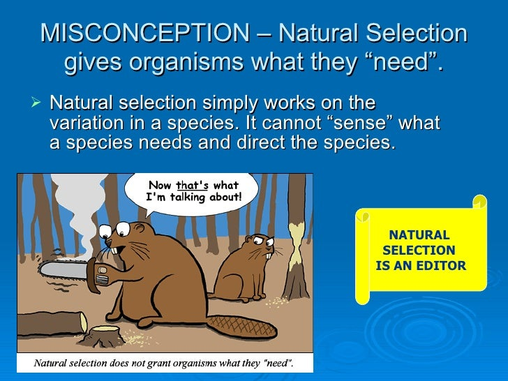 Natural Selection Gives Organisms What They Need