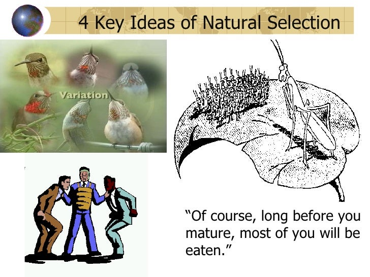 Tenets Of Evolution By Natural Selection