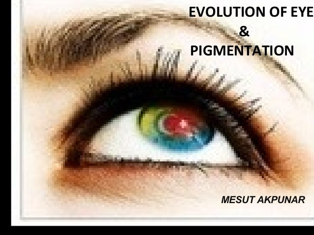 EVOLUTION OF EYE & PIGMENTATION MESUT AKPUNAR