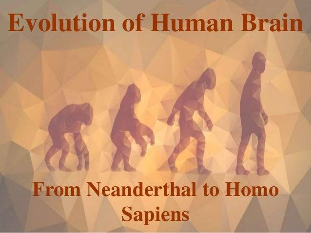 Evolution of Human Brain From Neanderthal to Homo Sapiens