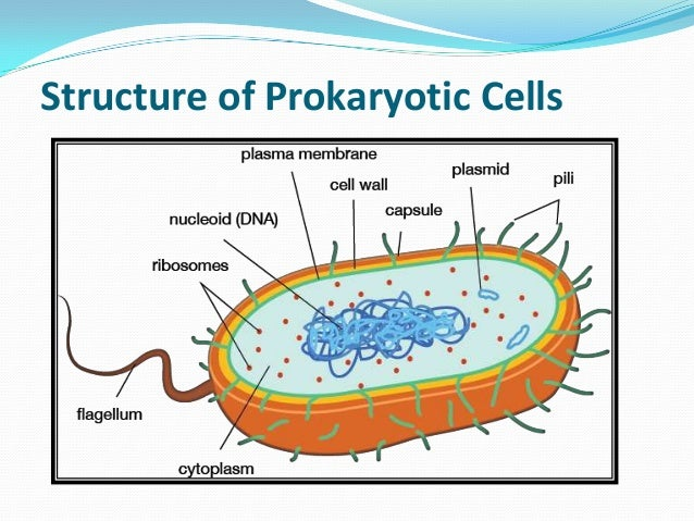 Evolution of prokaryotic and eukaryotic cells