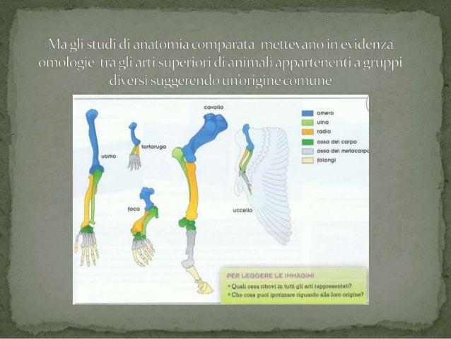 Evoluzione Slide 2