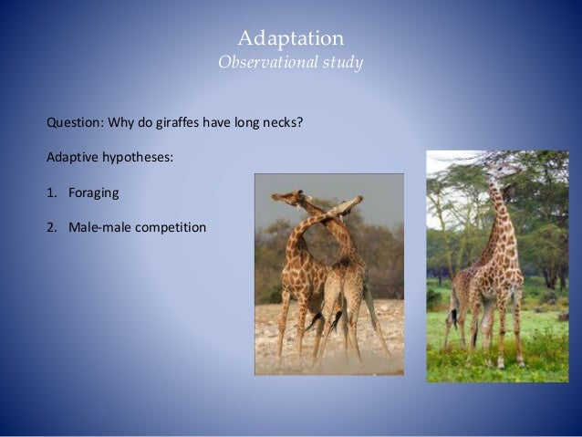 Explain How Natural Selection Can Lead To Adaptation