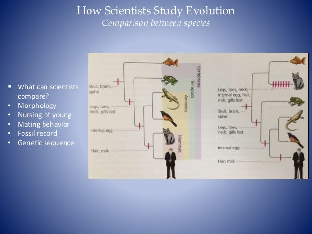 Comparison Between Genetic Flow And Natural Selection