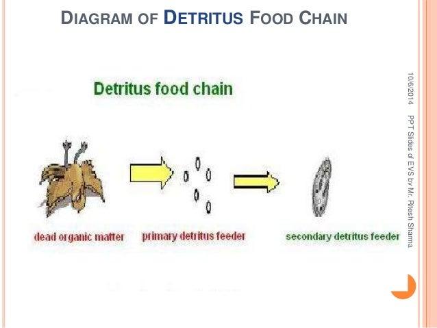 Detritus Food Chain Diagram