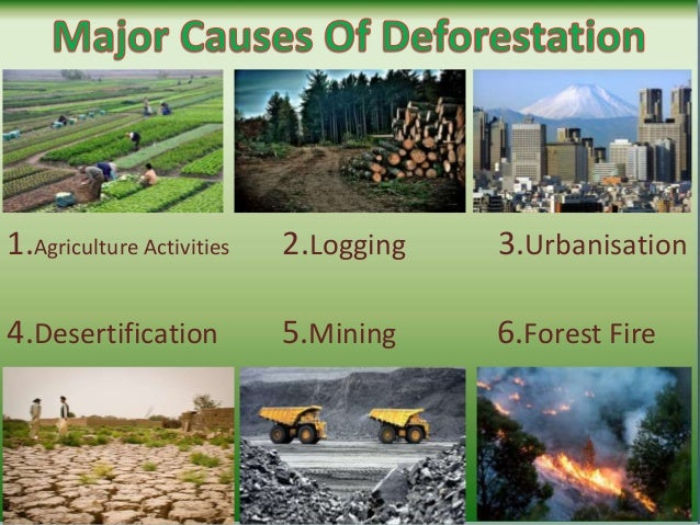 an overview of the causes and effects of deforestation Causes of deforestation 1 agricultural activities: as earlier mentioned in the overview, agricultural activities are one of the major factors affecting deforestation due to overgrowing demand for food products, huge amount of tress are fell down to grow crops and for cattle gazing.