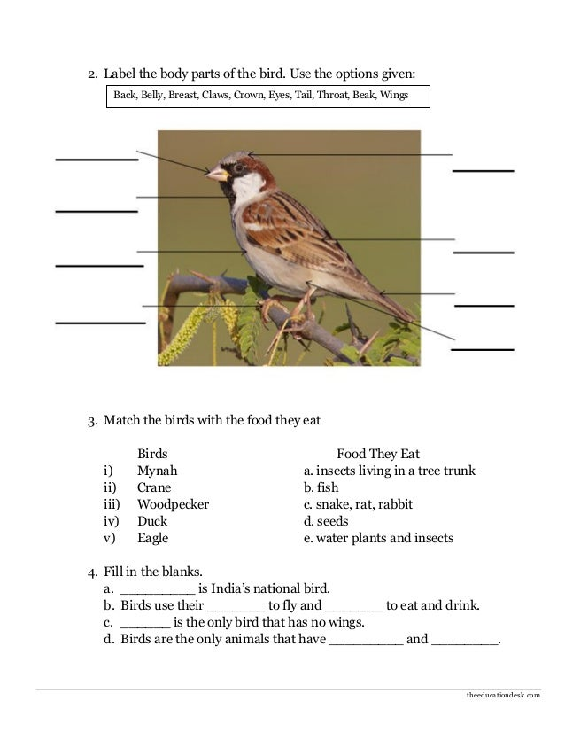 Birds Worksheets For Class 3 Ora Exacta