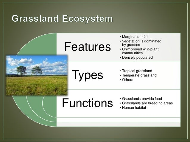 main features of tropical grassland