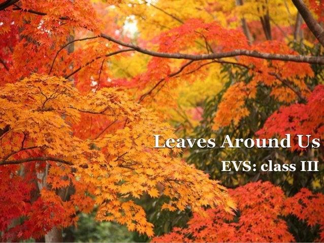 EVS: class III