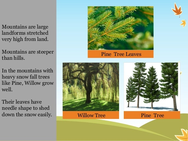 Environmental science evs plants around us class iii for Different types of plants and trees