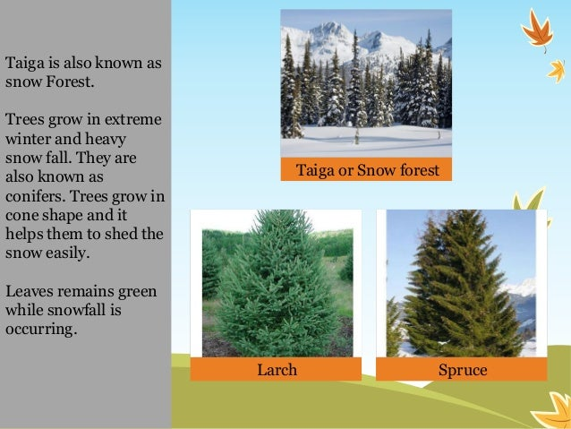 trees or plants around us Shrubs are multi-stemmed woody plants that rarely exceed 15 feet in height take a look around will other trees connect with us sign.