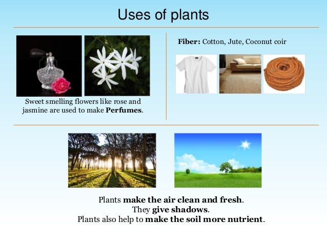 Environmental Science (EVS) : Plants Around Us (Class III