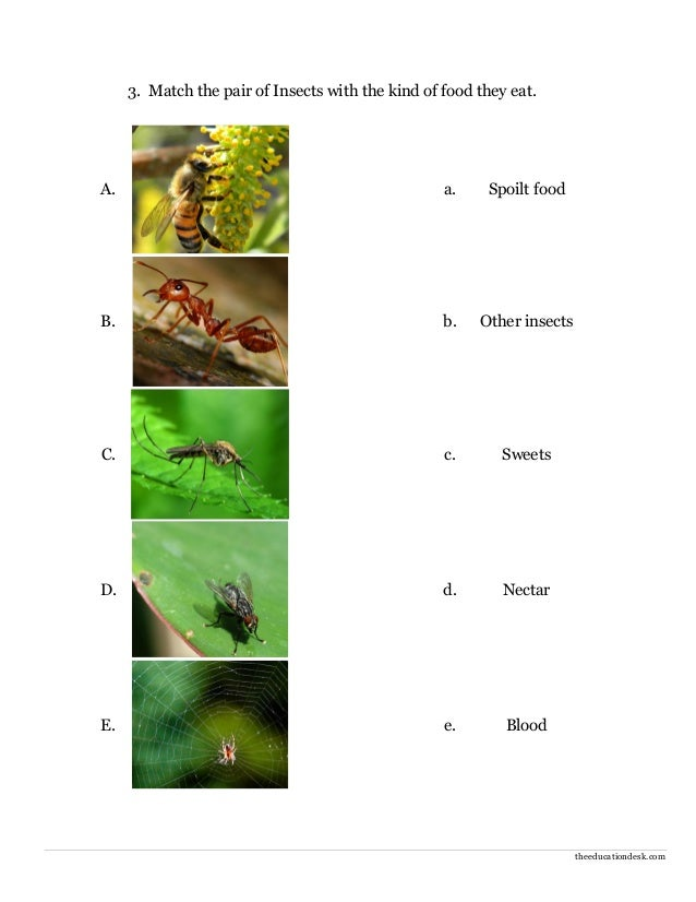 Environmental Science (EVS): Insects Worksheet (Class II)