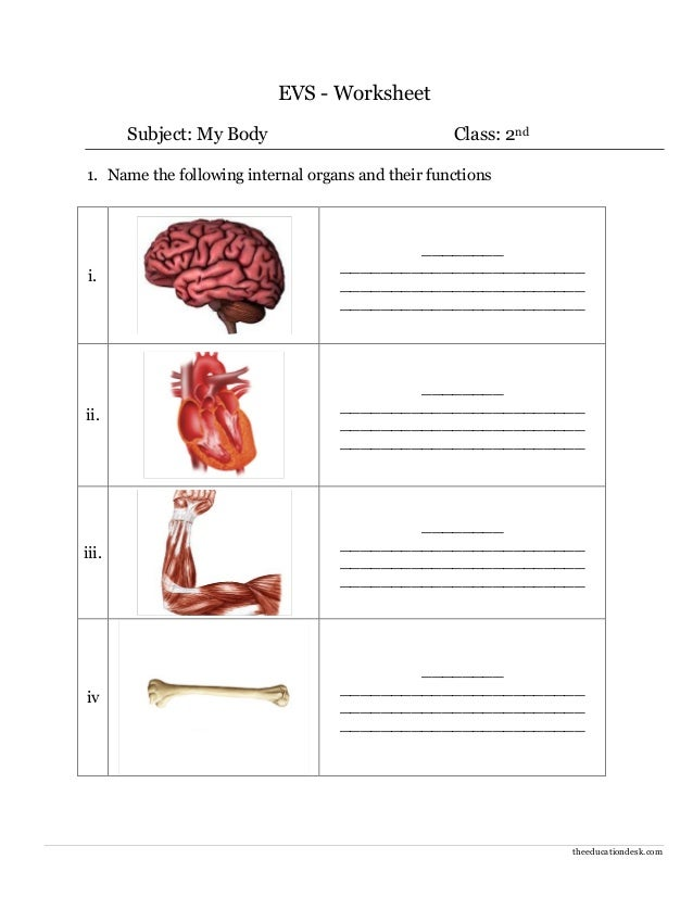 Printable Worksheets science worksheets for class 5 : Environmental Science (EVS) : Body Parts Worksheet (Class II)
