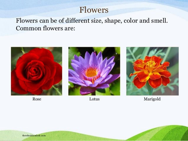 pictures of different flowers and their names  roselawnlutheran, Beautiful flower