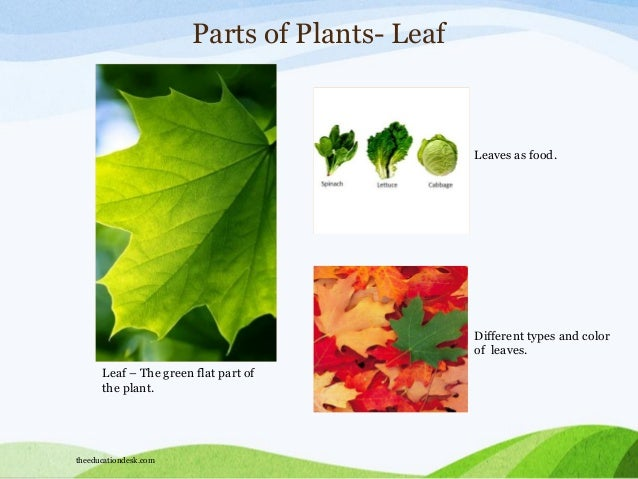 Environmental Science Evs Plants And Trees Class I on Uses Of Plants Grade 2 Evs Science