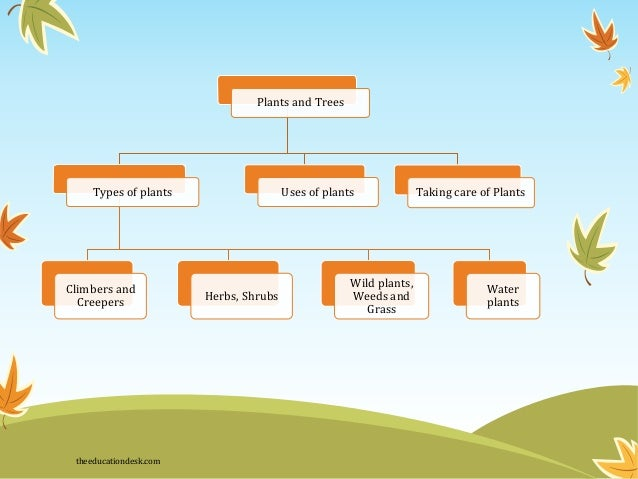 Environmental Science (EVS) : Plants (Class II)