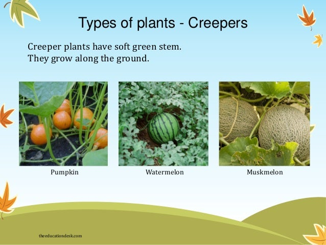 environmental-science-evs-plants-class-ii-4-638.jpg (638×479)