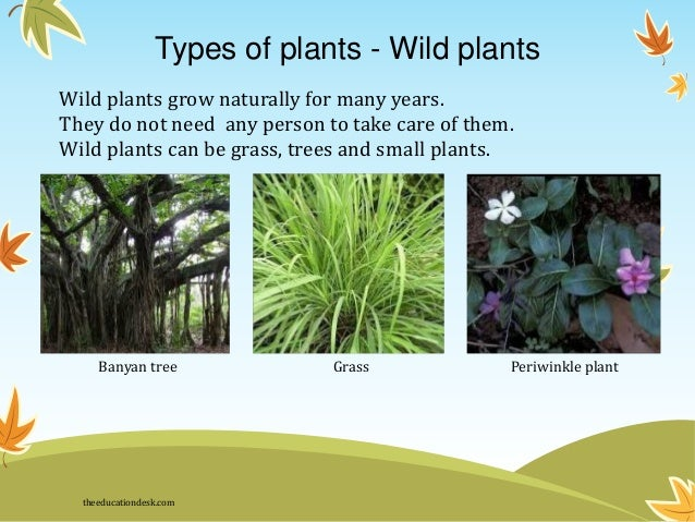 Essay on different types of plants