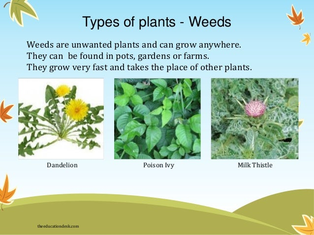 types of plants weeds - Types Of Weeds