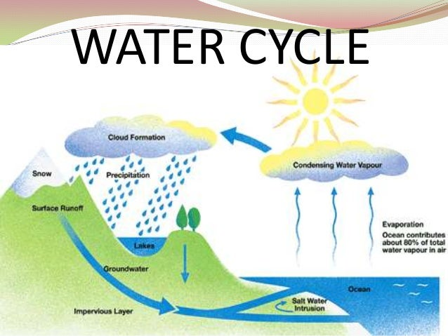 Clear diagram of water cycle gallery how to guide and refrence water cycle diagram with explanation in hindi gallery ccuart Gallery