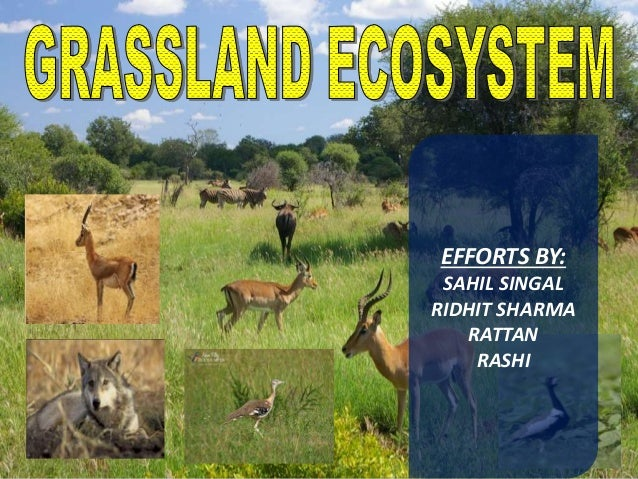 EFFORTS BY: SAHIL SINGAL RIDHIT SHARMA RATTAN RASHI