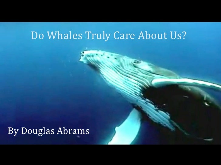 Do Whales Truly Care About Us? By Douglas Abrams