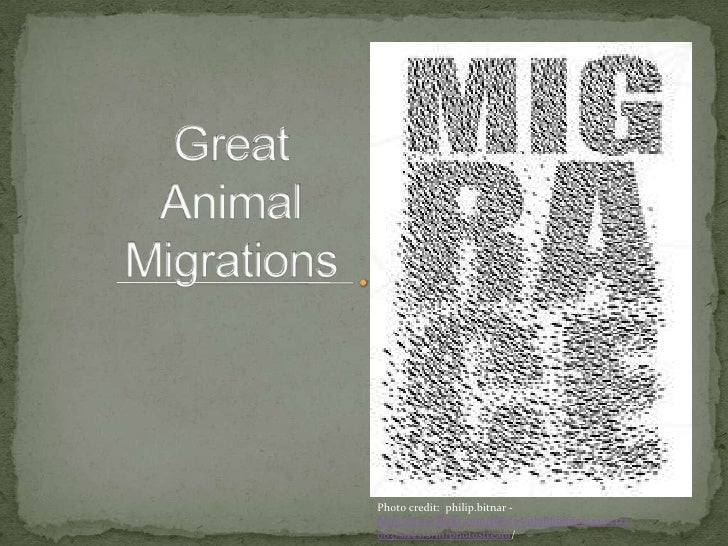 Great Animal Migrations<br />Photo credit:  philip.bitnar - http://www.flickr.com/photos/philipbitnar/4300322083/sizes/s/i...