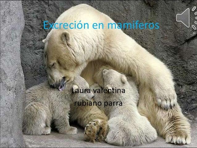 Excreción en mamiferos Laura valentina rubiano parra