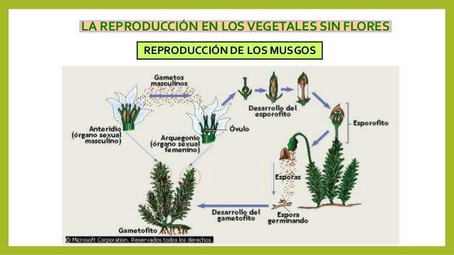 Reproducci n de las plantas - Cuidados de los helechos ...