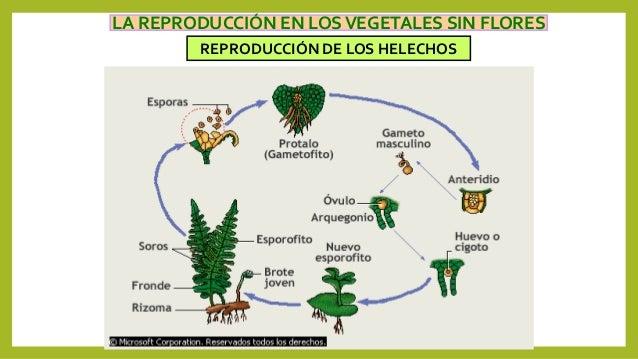 Reproduccion asexual de las plantas con flores
