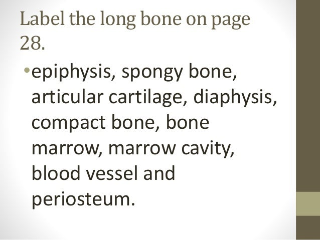 Anatomy review questions