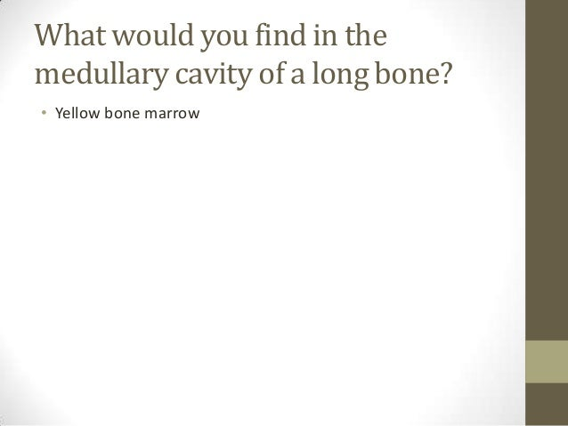 Exam 1 Review Questions Anatomy