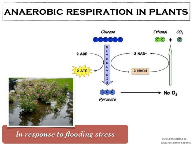 images of respiration in plants