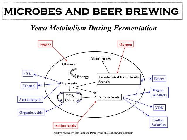 Classical Biotechnology Fermentation