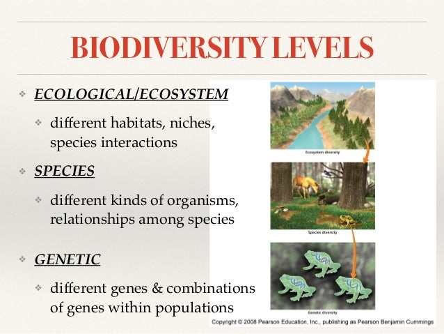 biomes and diversity 3 essay At the same time we have to keep in mind the diversity of plants more about biome are constellations of adaptations essay 526 words | 3 pages marine biomes.