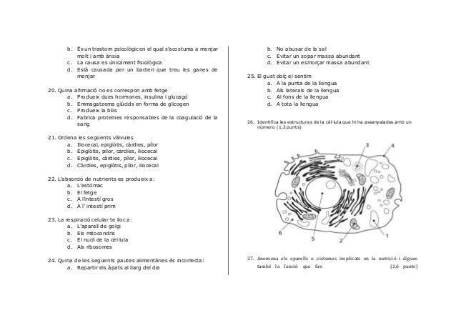 Exam 3eso 1aval Slide 3