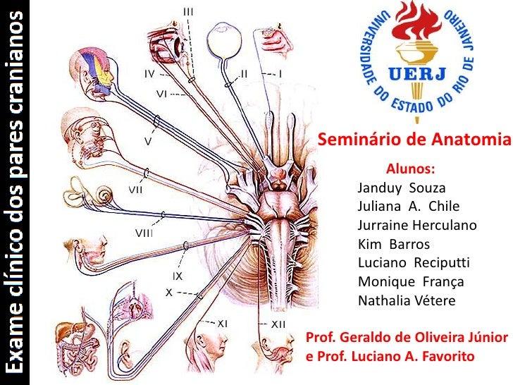 Seminário de Anatomia<br />Alunos:<br />Janduy  Souza<br />Juliana  A.  Chile<br />JurraineHerculano<br />Kim  Barros<br /...