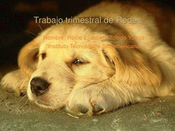 """Trabajo trimestral de Redes   Nombre: Rocio Elizabeth Toledo Yunga    """"Instituto Tecnológico Sudamericano"""""""