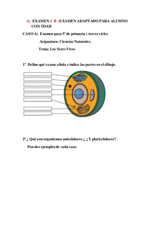 A) EXAMEN // B ) EXAMEN ADAPTADO PARA ALUMNO CON TDAH CASO A) Examen para 5º de primaria ( tercer ciclo) Asignatura: Cienc...