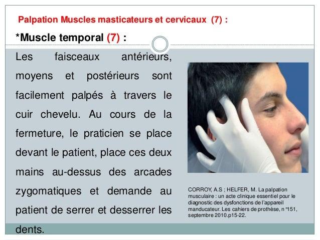 *Muscle temporal (7) : Les faisceaux antérieurs, moyens et postérieurs sont facilement palpés à travers le cuir chevelu. A...