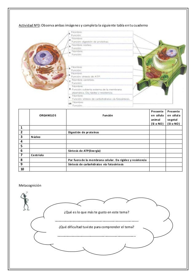 Examen de la celula