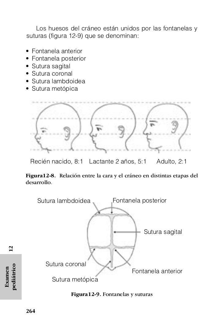 Lujo Fontanelas Friso - Imágenes de Anatomía Humana - inworldztech.com