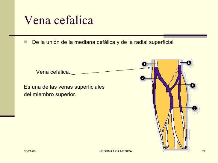 Miembro superior anatomia